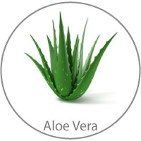 Organic Aloe Vera Harry & Rose ingredient