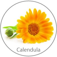 Calendula Harry & Rose Ingredient