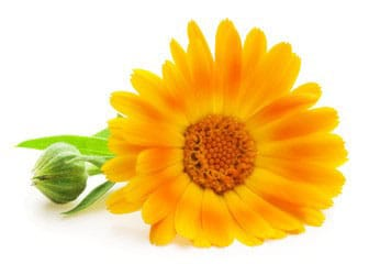 Calendula oil benefits for baby care